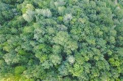 Skog från lufta arkivbilder