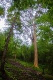 Skog från Phu kradueng Fotografering för Bildbyråer