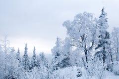 skog fryst quiet vinterunderland royaltyfria bilder