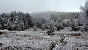 skog fryst vinter arkivbild