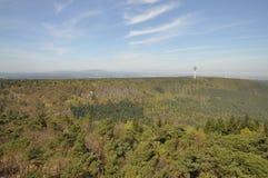 skog germany Arkivfoto