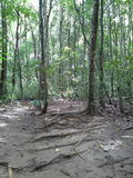 Skog Hadyai Songkhla Thailand Arkivfoton