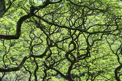 skog hawaii Arkivbilder
