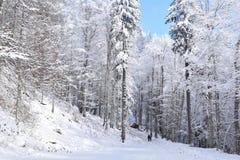 Skog hughed av snö royaltyfria bilder