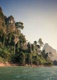 Skog i ön Royaltyfri Bild