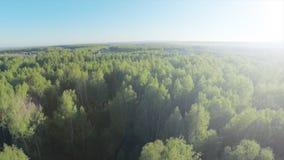 Skog i antenn för solig dag Siktsfron för Wood och blå himmel himlen Flyg- sikt på härlig stor skog i höst, i Arkivbild