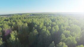 Skog i antenn för solig dag Siktsfron för Wood och blå himmel himlen Flyg- sikt på härlig stor skog i höst, i Arkivbilder