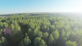 Skog i antenn för solig dag Siktsfron för Wood och blå himmel himlen Flyg- sikt på härlig stor skog i höst, i Arkivfoton