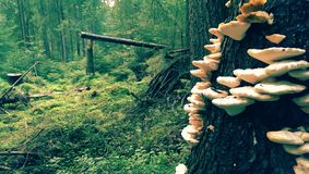Skog i Apuseni berg arkivfoto
