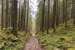 Skog i Berchtesgaden Arkivfoton