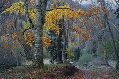 Skog i berg arkivfoto
