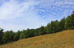 Skog i berg med en panorama av moln Royaltyfria Bilder
