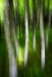 Skog i bergen arkivbild