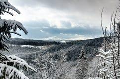 Skog i bergen Fotografering för Bildbyråer
