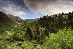 Skog i bergen arkivfoto