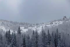 Skog i bergen Träden var fullständigt frostiga royaltyfria bilder