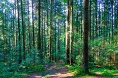 Skog i Carpathiansna Fotografering för Bildbyråer