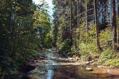 Skog i de Carpathian bergen royaltyfri fotografi