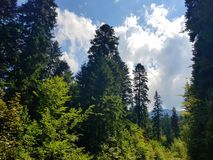 Skog i de Charpatian bergen royaltyfria foton