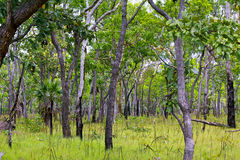 Skog i den Kakadu nationalparken Arkivbild