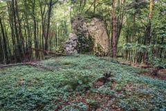 Skog i den polska Jura regionen Royaltyfria Foton