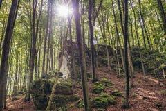 Skog i den polska Jura regionen Royaltyfri Foto