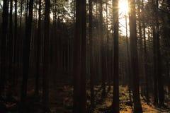 Skog i den Sumava nationalparken Arkivbilder