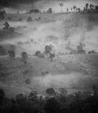 Skog i dimma. Arkivfoton