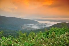 Skog i dimma. Royaltyfria Foton