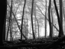 Skog i dimma Arkivbilder