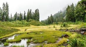 Skog i dimma Fotografering för Bildbyråer