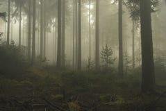 Skog i dimma Royaltyfria Bilder