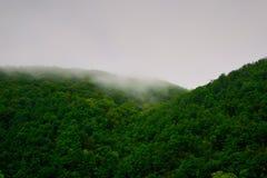 Skog i dimma Arkivbild