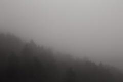 Skog i dimma royaltyfri bild