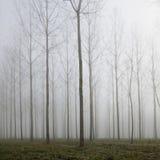 Skog i dimma och höstsidor på gräsplanjordningen royaltyfri bild