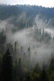 Skog i dimman Arkivfoto