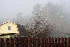 Skog i dimman Arkivbild