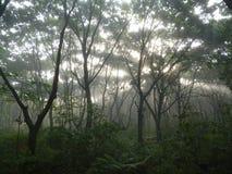 Skog i dimman Fotografering för Bildbyråer
