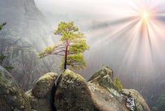 Skog i dimmiga Bubnyshche Royaltyfria Foton