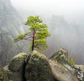 Skog i dimmiga Bubnyshche Arkivfoto