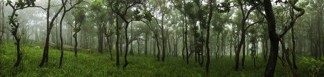 Skog i ett vårpanoramalandskap Royaltyfri Bild