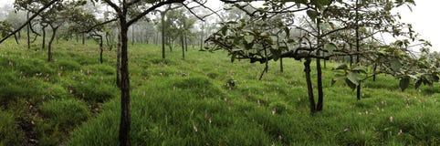 Skog i ett vårpanoramalandskap Arkivbilder