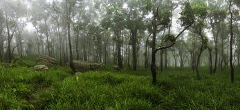 Skog i ett vårpanoramalandskap Arkivfoto