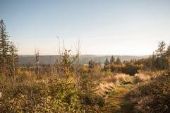 Skog i Europa, Tyskland, Bayern, övreFranconia, Döbra, Döbraber Arkivfoton