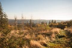 Skog i Europa, Tyskland, Bayern, övreFranconia, Döbra, Döbraber Royaltyfri Fotografi