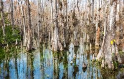 Skog i Everglades Royaltyfri Foto