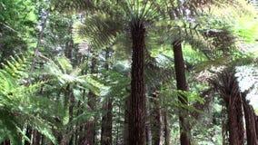 Skog i fantastiskt landskap i Nya Zeeland stock video