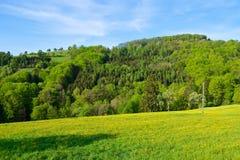 Skog i fjäder Royaltyfri Foto