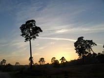 Skog i goldsunset royaltyfria foton