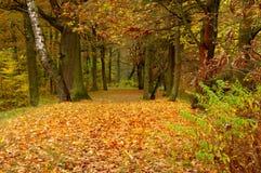 Skog i höst. Royaltyfria Bilder